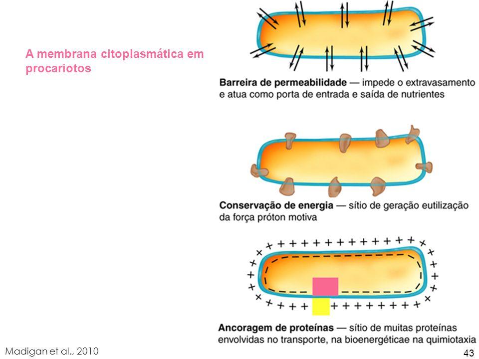 A membrana citoplasmática em procariotos Madigan et al., 2010 43