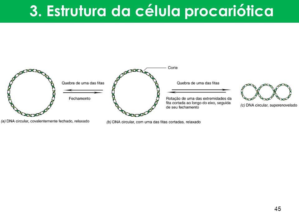 3. Estrutura da célula procariótica 45