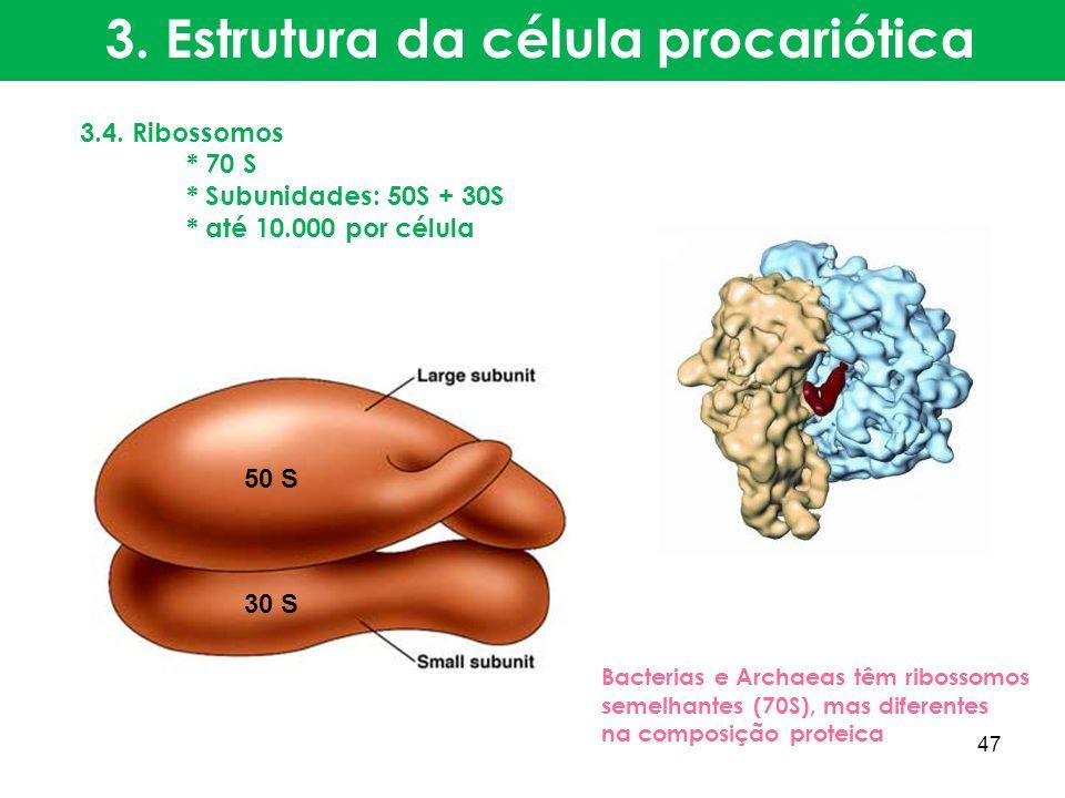 3.4. Ribossomos * 70 S * Subunidades: 50S + 30S * até 10.000 por célula Bacterias e Archaeas têm ribossomos semelhantes (70S), mas diferentes na compo