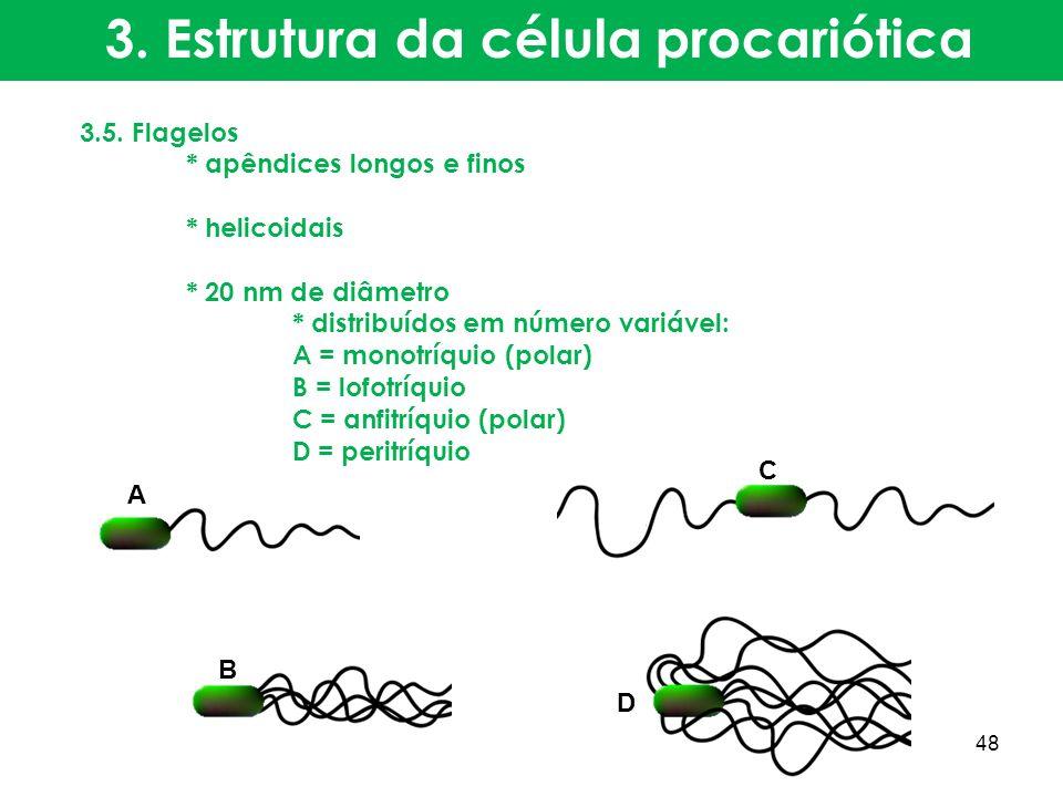 3.5. Flagelos * apêndices longos e finos * helicoidais * 20 nm de diâmetro * distribuídos em número variável: A = monotríquio (polar) B = lofotríquio