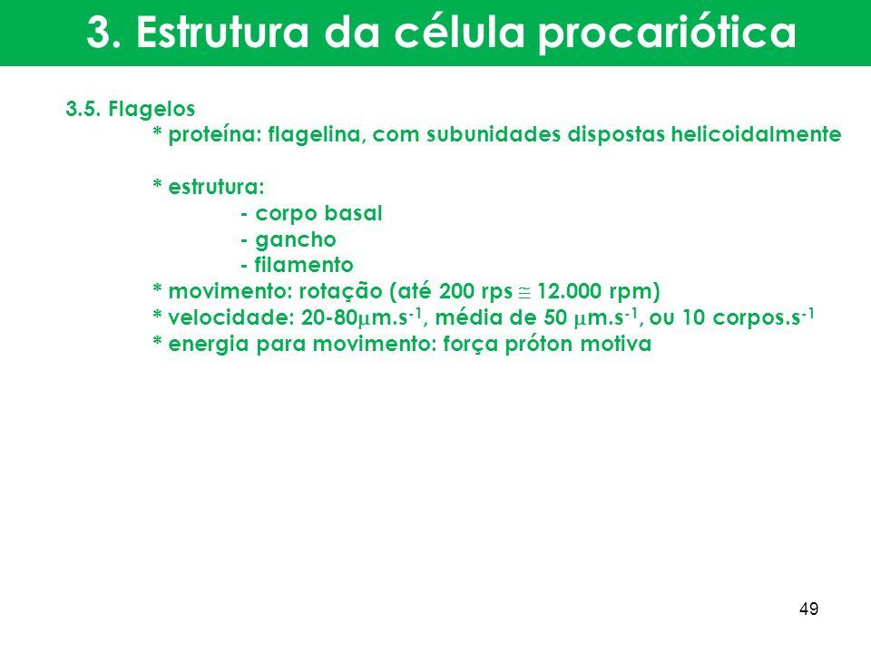3.5. Flagelos * proteína: flagelina, com subunidades dispostas helicoidalmente * estrutura: - corpo basal - gancho - filamento * movimento: rotação (a