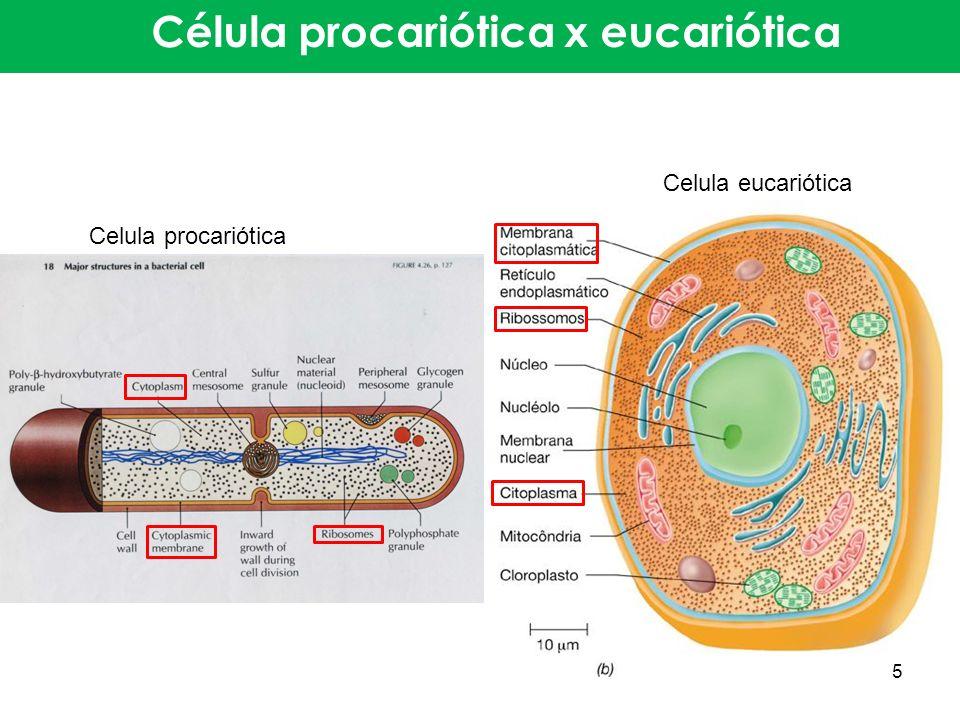 Célula procariótica x eucariótica 5 Celula procariótica Celula eucariótica