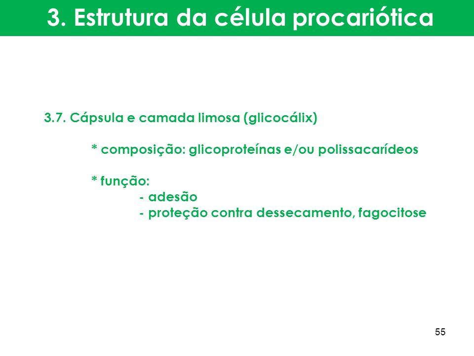 3.7. Cápsula e camada limosa (glicocálix) * composição: glicoproteínas e/ou polissacarídeos * função: - adesão - proteção contra dessecamento, fagocit