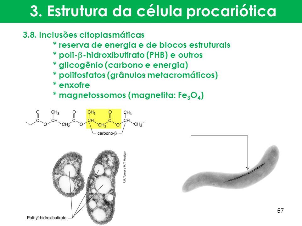 3.8. Inclusões citoplasmáticas * reserva de energia e de blocos estruturais * poli- -hidroxibutirato (PHB) e outros * glicogênio (carbono e energia) *