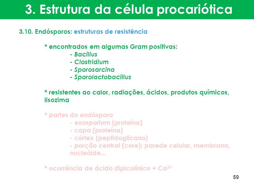 3.10. Endósporos: estruturas de resistência * encontrados em algumas Gram positivas: - Bacillus - Clostridium - Sporosarcina - Sporolactobacillus * re