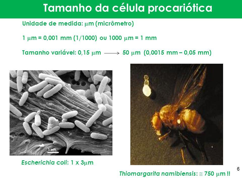 Unidade de medida: m (micrômetro) 1 m = 0,001 mm (1/1000) ou 1000 m = 1 mm Tamanho variável: 0,15 m 50 m (0,0015 mm – 0,05 mm) Tamanho da célula proca
