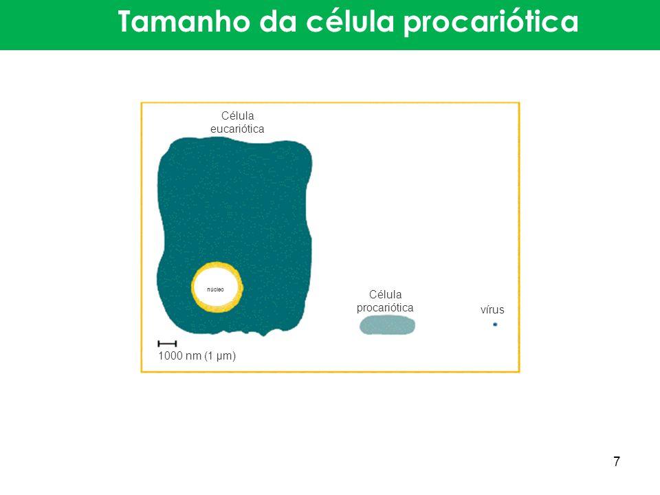 Tamanho da célula procariótica 1000 nm (1 μm) Célula eucariótica Célula procariótica vírus núcleo 7