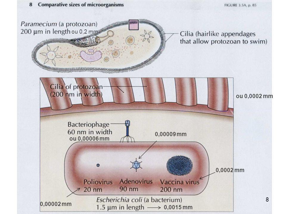 O pequeno tamanho dos procariotos comparado ao dos eucariotos contribui para muitas características desses organismos: Tamanho da célula procariótica 9