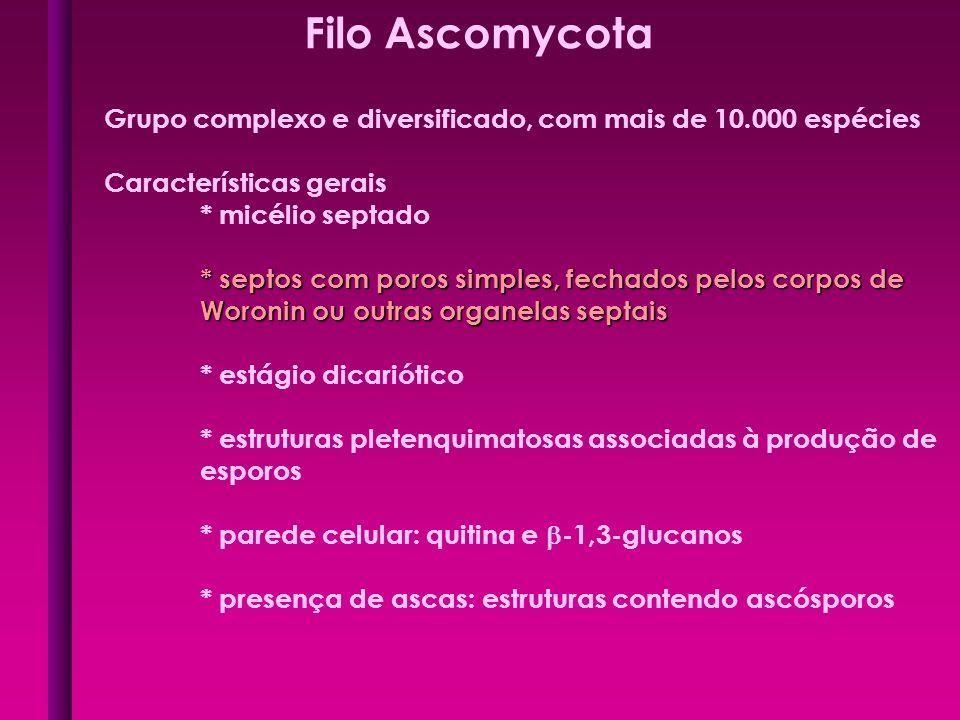 Filo Ascomycota Grupo complexo e diversificado, com mais de 10.000 espécies Características gerais * micélio septado * septos com poros simples, fecha