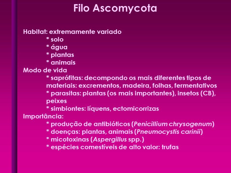 Filo Ascomycota Habitat: extremamente variado * solo * água * plantas * animais Modo de vida * saprófitas: decompondo os mais diferentes tipos de mate