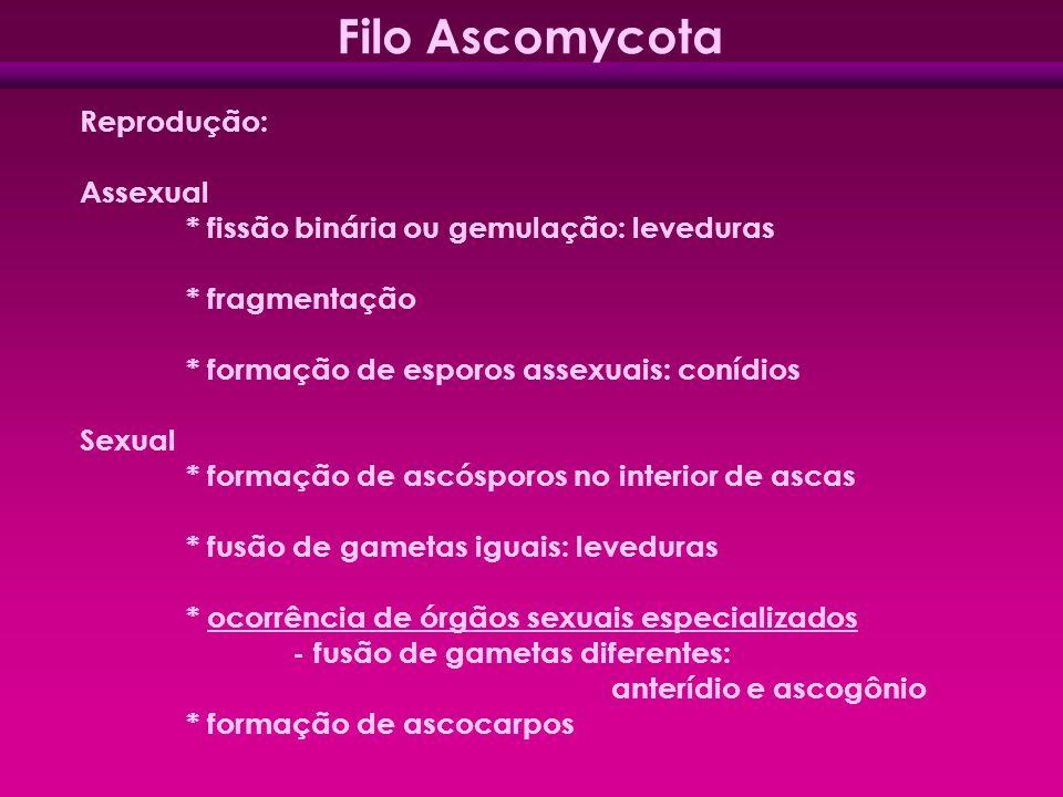 Reprodução: Assexual * fissão binária ou gemulação: leveduras * fragmentação * formação de esporos assexuais: conídios Sexual * formação de ascósporos