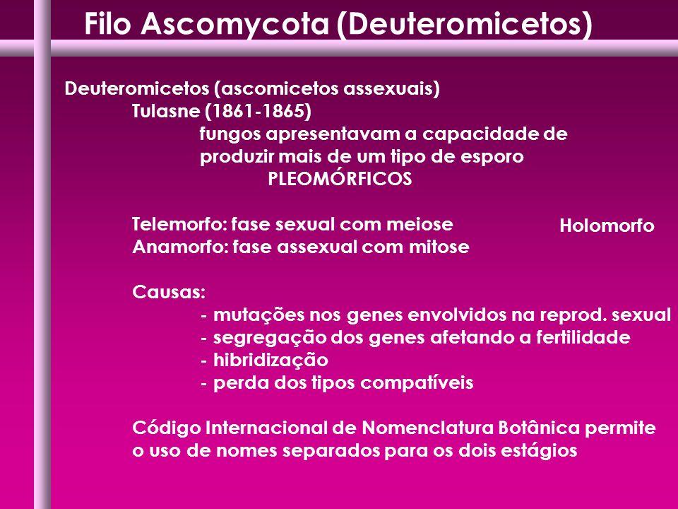 Deuteromicetos (ascomicetos assexuais) Tulasne (1861-1865) fungos apresentavam a capacidade de produzir mais de um tipo de esporo PLEOMÓRFICOS Telemor