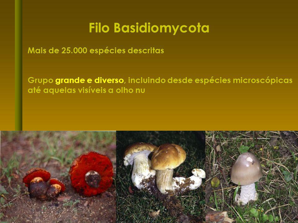 Filo Basidiomycota Mais de 25.000 espécies descritas Grupo grande e diverso, incluindo desde espécies microscópicas até aquelas visíveis a olho nu