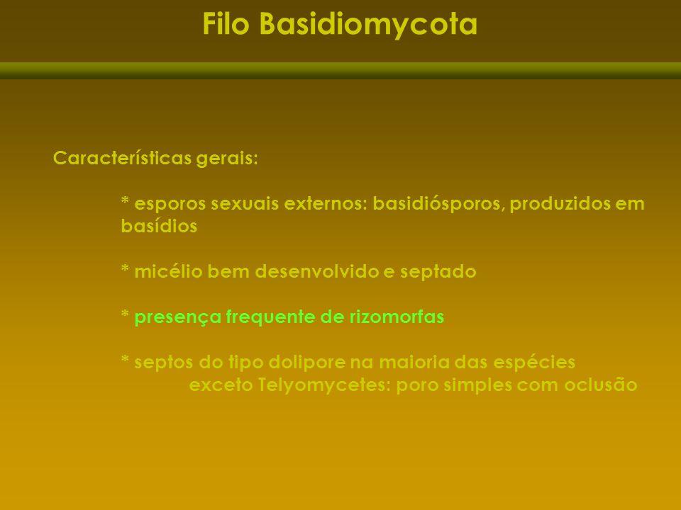 Características gerais: * esporos sexuais externos: basidiósporos, produzidos em basídios * micélio bem desenvolvido e septado * presença frequente de