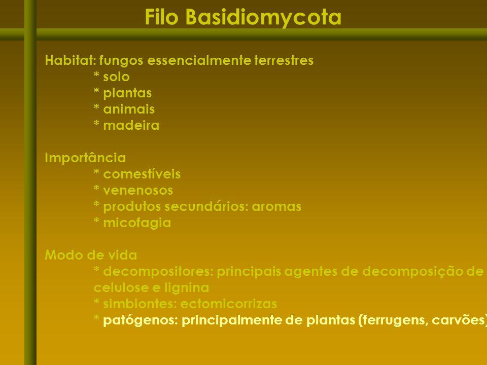 Filo Basidiomycota Habitat: fungos essencialmente terrestres * solo * plantas * animais * madeira Importância * comestíveis * venenosos * produtos sec