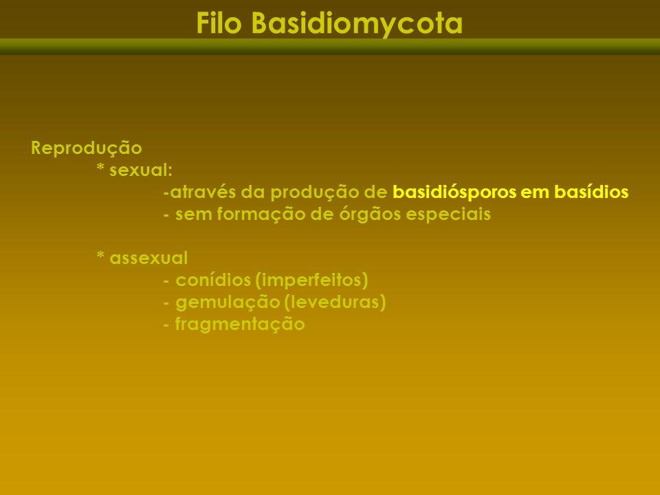 Filo Basidiomycota Reprodução * sexual: -através da produção de basidiósporos em basídios - sem formação de órgãos especiais * assexual - conídios (im