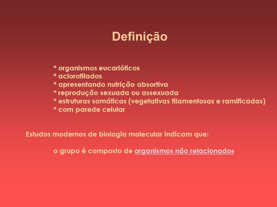 Definição * organismos eucarióticos * aclorofilados * apresentando nutrição absortiva * reprodução sexuada ou assexuada * estruturas somáticas (vegeta