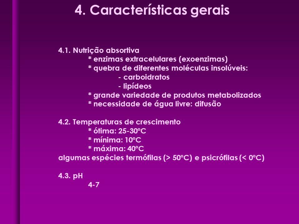 4. Características gerais 4.1. Nutrição absortiva * enzimas extracelulares (exoenzimas) * quebra de diferentes moléculas insolúveis: - carboidratos -
