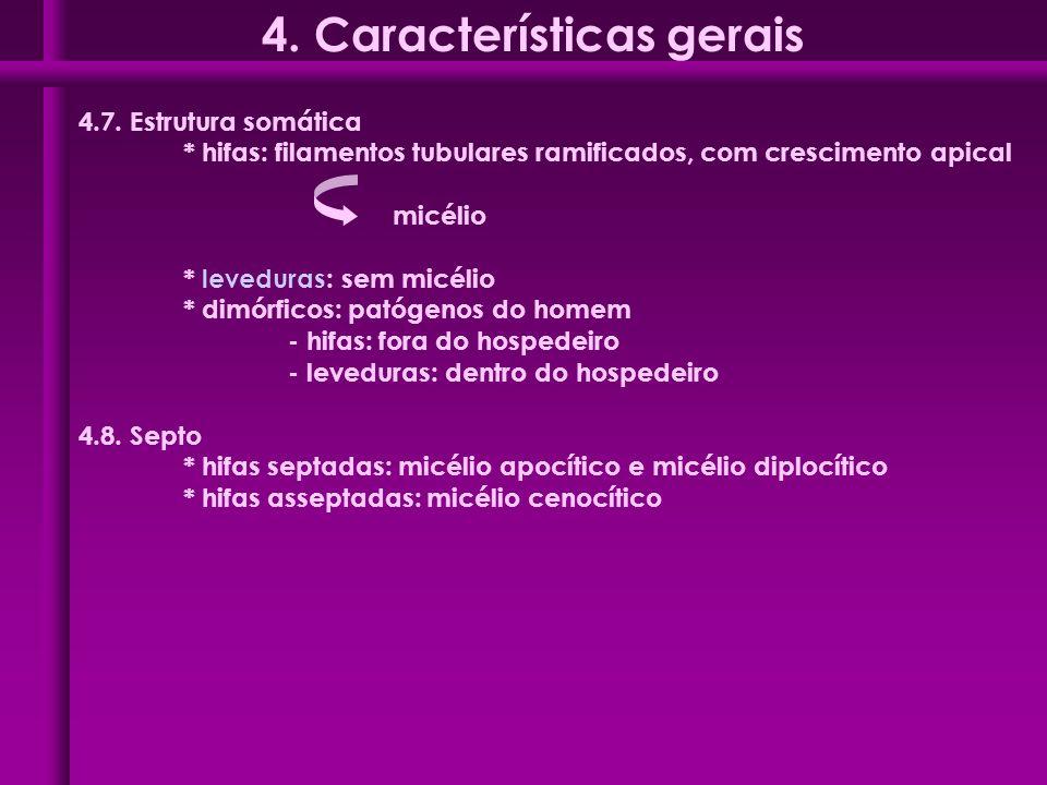 4.7. Estrutura somática * hifas: filamentos tubulares ramificados, com crescimento apical micélio * leveduras: sem micélio * dimórficos: patógenos do