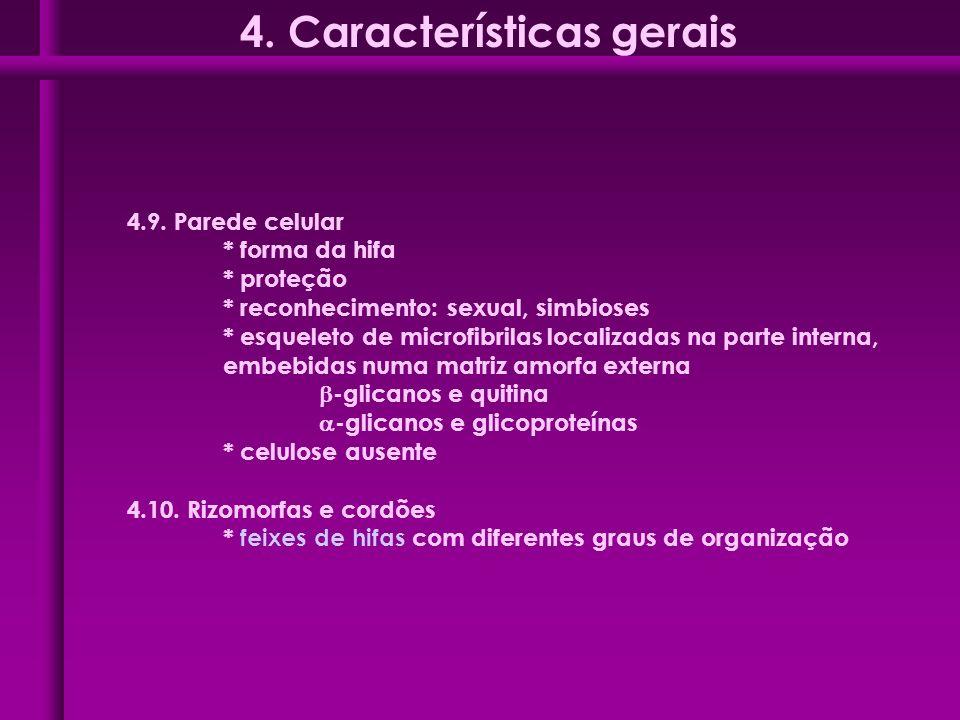 4.9. Parede celular * forma da hifa * proteção * reconhecimento: sexual, simbioses * esqueleto de microfibrilas localizadas na parte interna, embebida