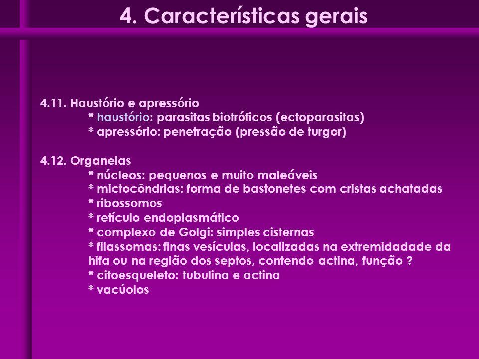 4.11. Haustório e apressório * haustório: parasitas biotróficos (ectoparasitas) * apressório: penetração (pressão de turgor) 4.12. Organelas * núcleos