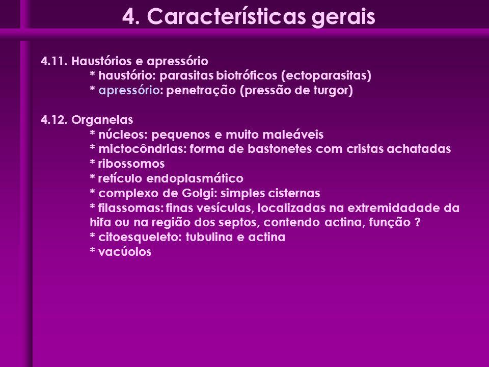 4.11. Haustórios e apressório * haustório: parasitas biotróficos (ectoparasitas) * apressório: penetração (pressão de turgor) 4.12. Organelas * núcleo
