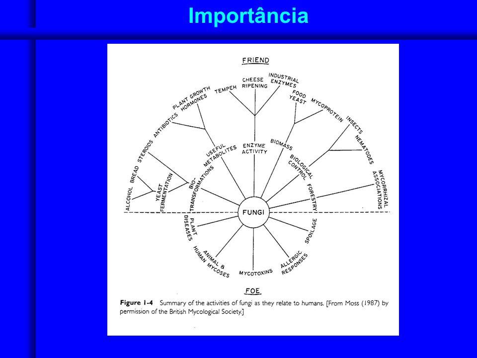 Filo Ascomycota Gemulação em leveduras