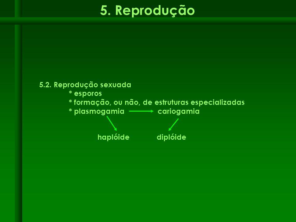 5. Reprodução 5.2. Reprodução sexuada * esporos * formação, ou não, de estruturas especializadas * plasmogamiacariogamia haplóidediplóide