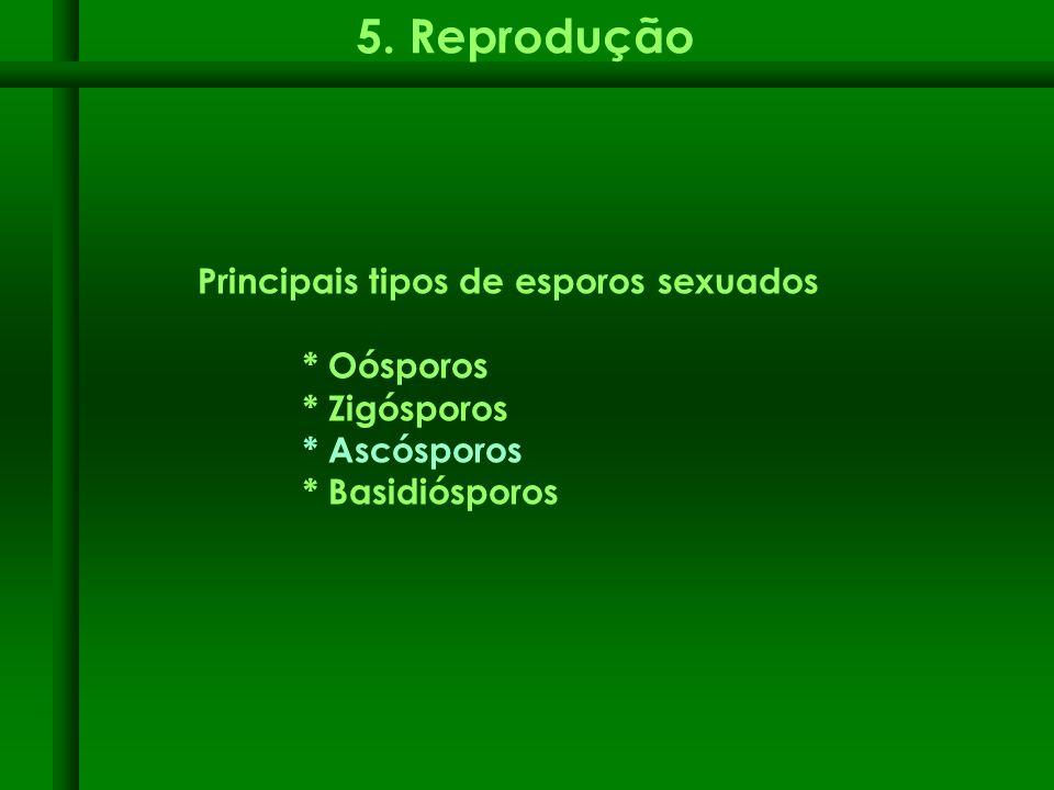 5. Reprodução Principais tipos de esporos sexuados * Oósporos * Zigósporos * Ascósporos * Basidiósporos