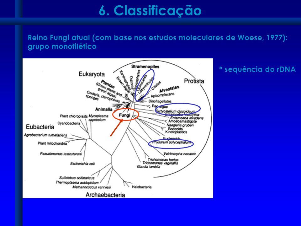 6. Classificação Reino Fungi atual (com base nos estudos moleculares de Woese, 1977): grupo monofilético * sequência do rDNA