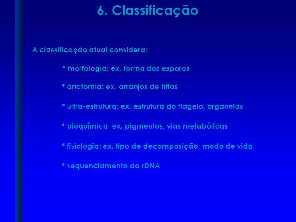 6. Classificação A classificação atual considera: * anatomia: ex. arranjos de hifas * ultra-estrutura: ex. estrutura do flagelo, organelas * bioquímic