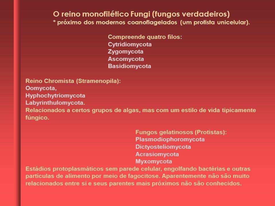O reino monofilético Fungi (fungos verdadeiros) * próximo dos modernos coanoflagelados (um protista unicelular). Compreende quatro filos: Cytridiomyco