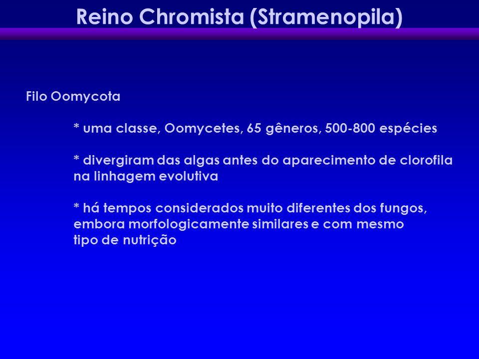 Reino Chromista (Stramenopila) Filo Oomycota * uma classe, Oomycetes, 65 gêneros, 500-800 espécies * divergiram das algas antes do aparecimento de clo