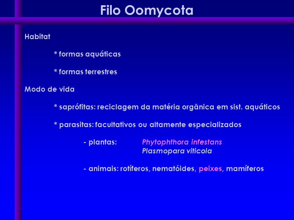 Filo Oomycota Habitat * formas aquáticas * formas terrestres Modo de vida * saprófitas: reciclagem da matéria orgânica em sist. aquáticos * parasitas: