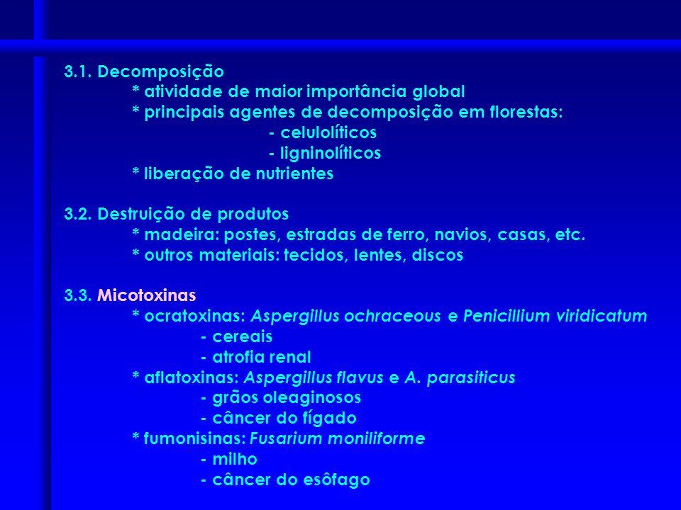 5. Reprodução zoósporos zoosporângio zoósporos