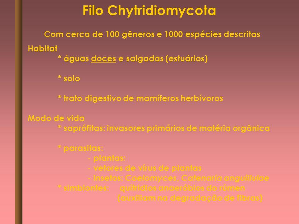 Filo Chytridiomycota Habitat * águas doces e salgadas (estuários) * solo * trato digestivo de mamíferos herbívoros Modo de vida * saprófitas: invasore