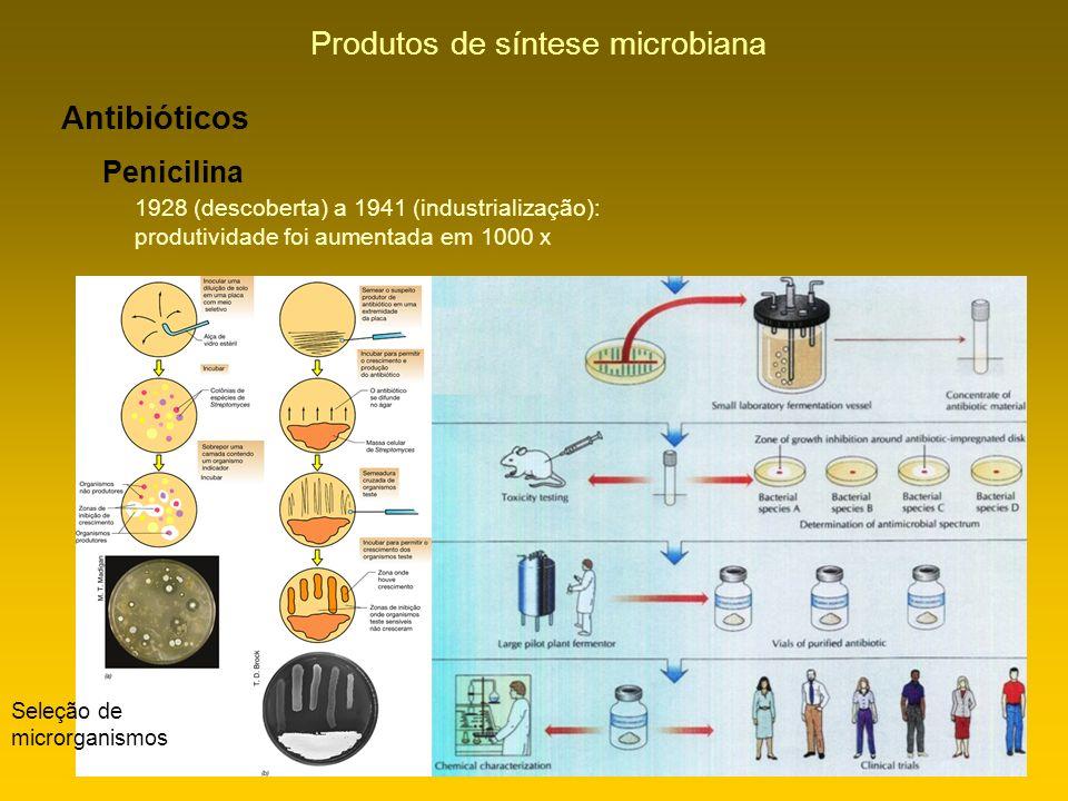 Produtos de síntese microbiana Antibióticos Penicilina 1928 (descoberta) a 1941 (industrialização): produtividade foi aumentada em 1000 x Seleção de m