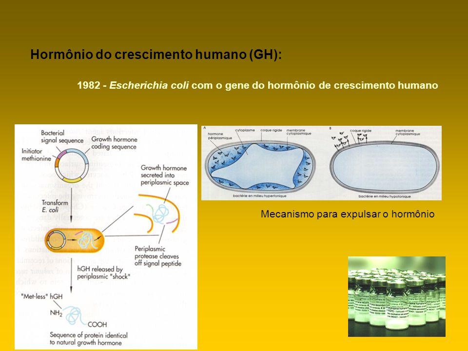 Mecanismo para expulsar o hormônio Hormônio do crescimento humano (GH): 1982 - Escherichia coli com o gene do hormônio de crescimento humano