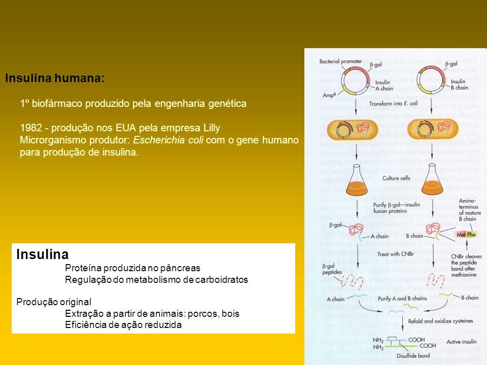 Insulina humana: 1º biofármaco produzido pela engenhariagenética 1982 - produção nos EUA pela empresa Lilly Microrganismo produtor: Escherichia coli c