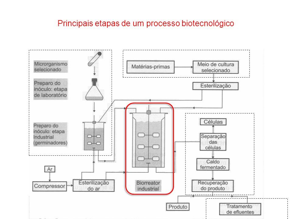 Principais etapas de um processo biotecnológico