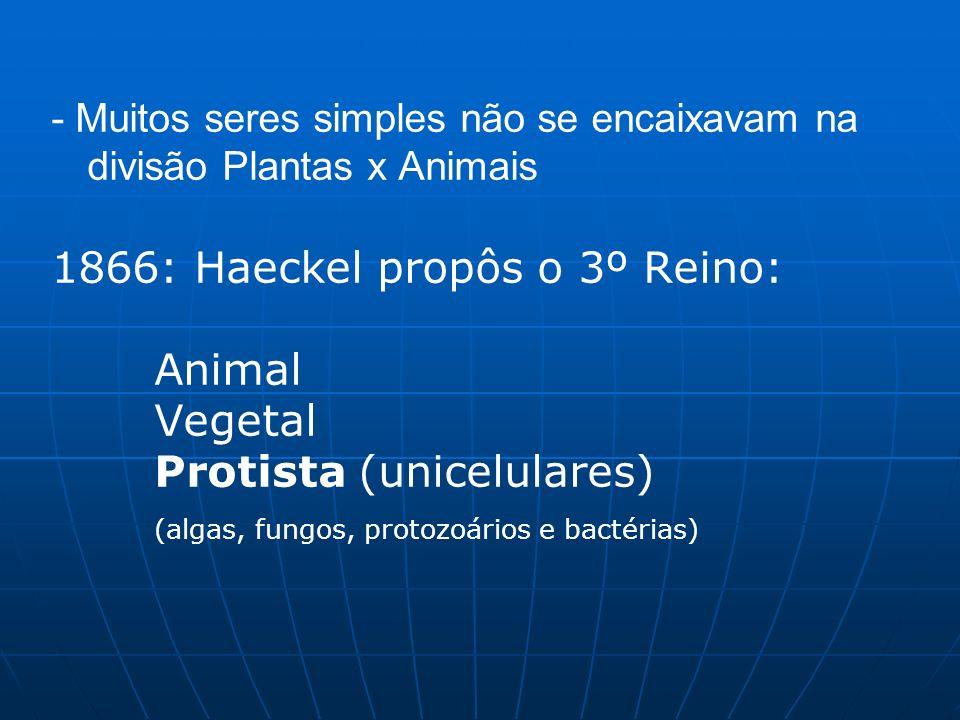 - Muitos seres simples não se encaixavam na divisão Plantas x Animais 1866: Haeckel propôs o 3º Reino: Animal Vegetal Protista (unicelulares) (algas,