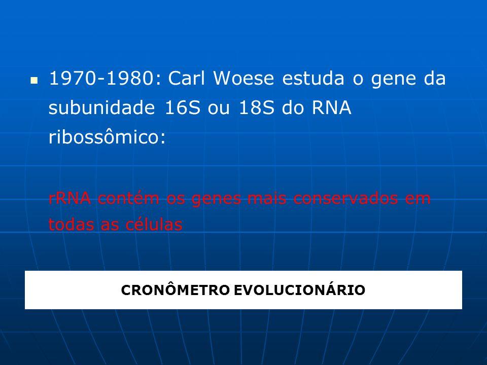 CRONÔMETRO EVOLUCIONÁRIO 1970-1980: Carl Woese estuda o gene da subunidade 16S ou 18S do RNA ribossômico: rRNA contém os genes mais conservados em tod