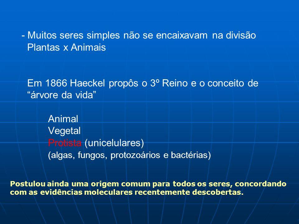 - Muitos seres simples não se encaixavam na divisão Plantas x Animais Em 1866 Haeckel propôs o 3º Reino e o conceito de árvore da vida Animal Vegetal Protista (unicelulares) (algas, fungos, protozoários e bactérias) Postulou ainda uma origem comum para todos os seres, concordando com as evidências moleculares recentemente descobertas.