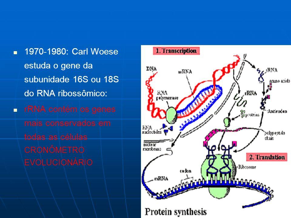1970-1980: Carl Woese estuda o gene da subunidade 16S ou 18S do RNA ribossômico: rRNA contém os genes mais conservados em todas as células CRONÔMETRO EVOLUCIONÁRIO