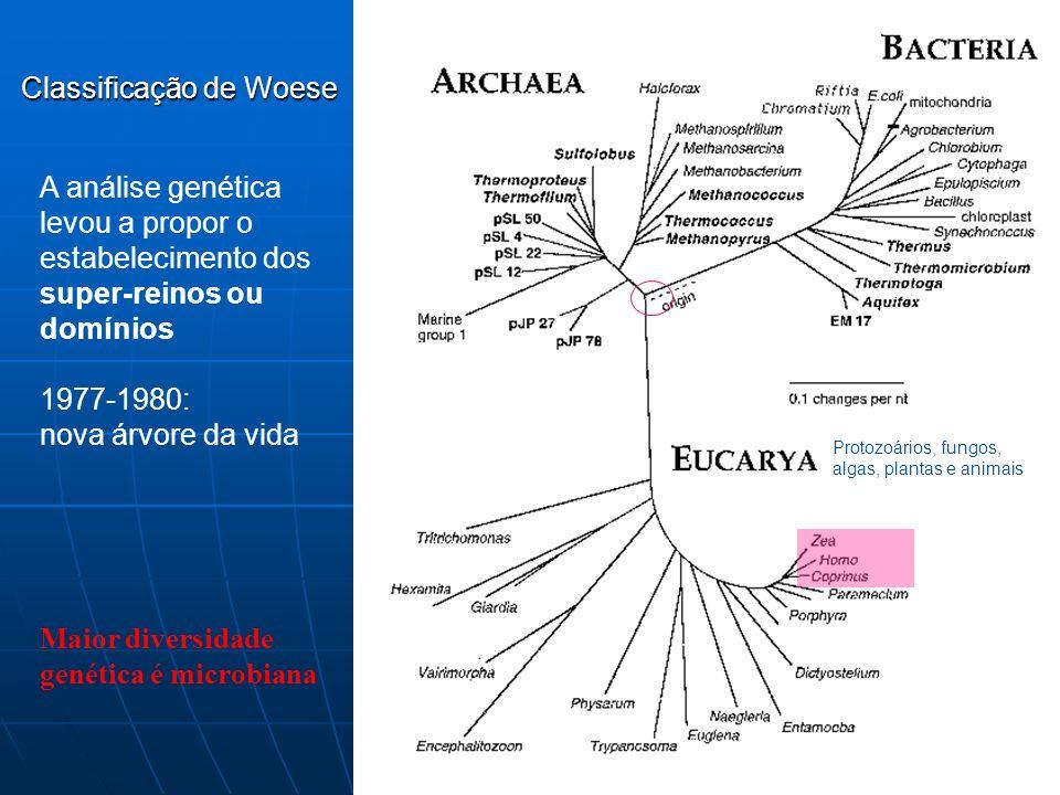 Maior diversidade genética é microbiana Classificação de Woese Protozoários, fungos, algas, plantas e animais A análise genética levou a propor o estabelecimento dos super-reinos ou domínios 1977-1980: nova árvore da vida