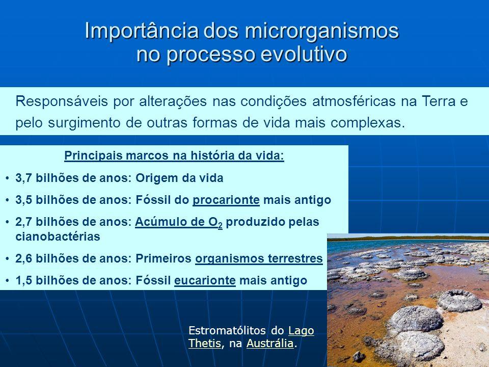 Importância dos microrganismos no processo evolutivo Responsáveis por alterações nas condições atmosféricas na Terra e pelo surgimento de outras formas de vida mais complexas.