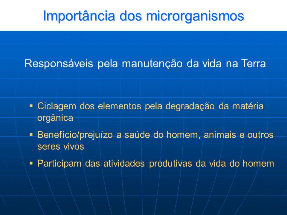 Importância dos microrganismos Responsáveis pela manutenção da vida na Terra Ciclagem dos elementos pela degradação da matéria orgânica Benefício/prejuízo a saúde do homem, animais e outros seres vivos Participam das atividades produtivas da vida do homem