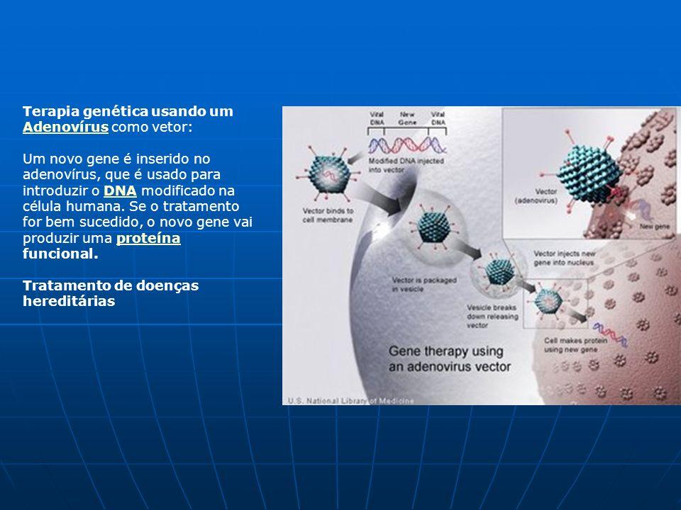 Terapia genética usando um Adenovírus como vetor: Adenovírus Um novo gene é inserido no adenovírus, que é usado para introduzir o DNA modificado na célula humana.