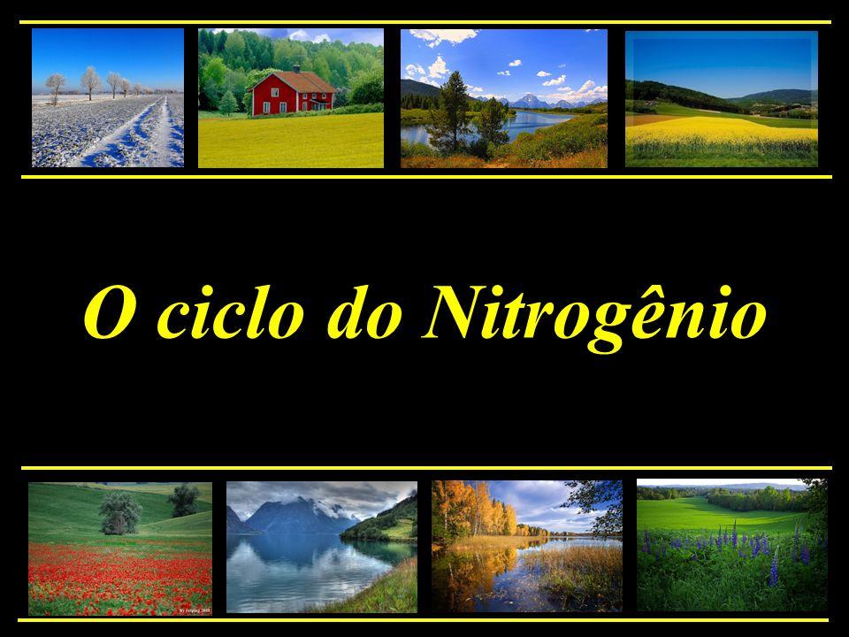 O ciclo do Nitrogênio