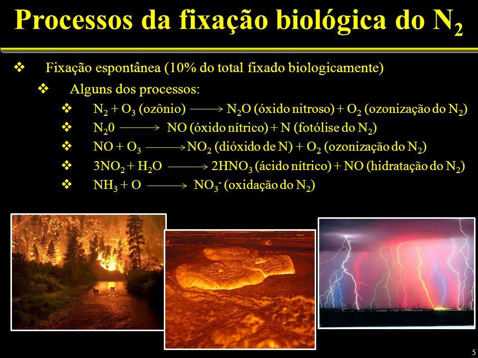 Processos da fixação biológica do N 2 Fixação espontânea (10% do total fixado biologicamente) Alguns dos processos: N 2 + O 3 (ozônio) N 2 O (óxido nitroso) + O 2 (ozonização do N 2 ) N 2 0 NO (óxido nítrico) + N (fotólise do N 2 ) NO + O 3 NO 2 (dióxido de N) + O 2 (ozonização do N 2 ) 3NO 2 + H 2 O 2HNO 3 (ácido nítrico) + NO (hidratação do N 2 ) NH 3 + O NO 3 - (oxidação do N 2 ) 5
